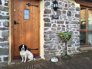 Dog Friendly B&B